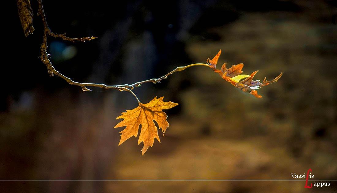 Φωτογραφία Ημέρας Δεκέμβριος 2019 - Αποχαιρετώντας το Φθινόπωρο- Βασίλης Λάππας